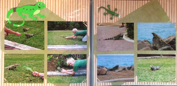 Aruba Vacation2009: Iguanas