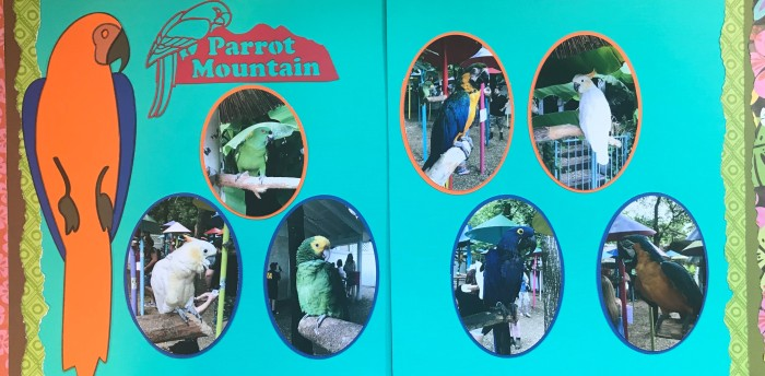 50th Anniversary: Parrot Mountain